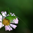 Tiny Hopper by Joy Watson