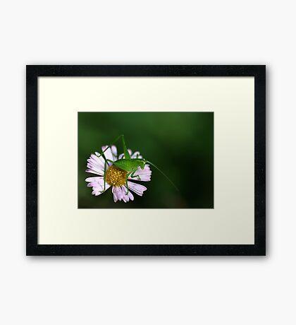 Tiny Hopper Framed Print