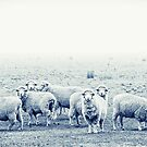 Sheep by ketut suwitra