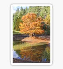 Swamp Cypress Reflections Sticker