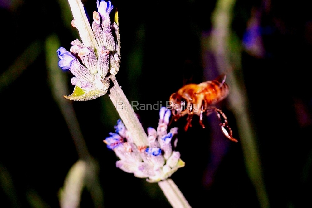 Bee on lavender by ♥⊱ B. Randi Bailey