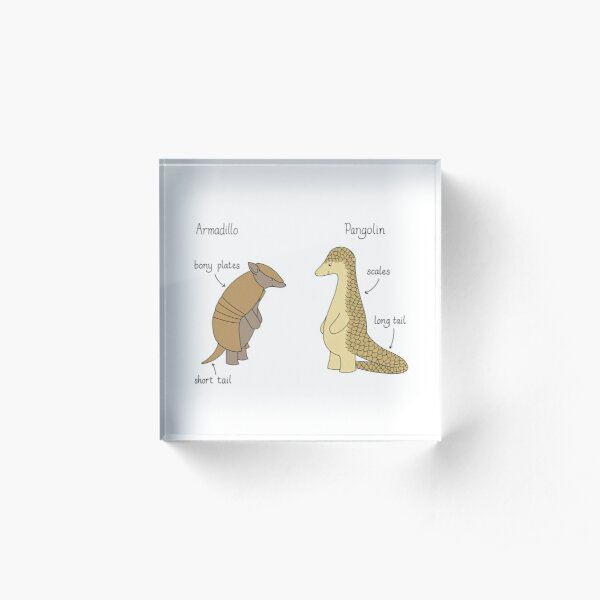 Armadillo or pangolin? Acrylic Block