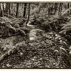 Whitehouse Creek  (Monochrome) by Bette Devine