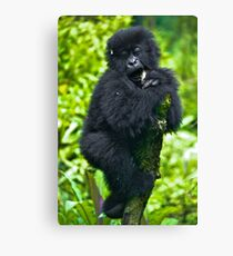 Playful Primate Canvas Print