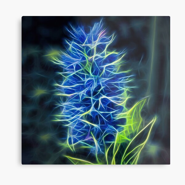 viper's bugloss – blueweed – echium vulgare ¦  Metal Print