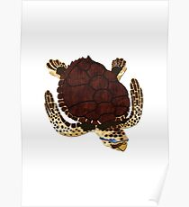 Swimming Turtle Isolated Poster