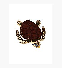 Swimming Turtle Isolated Photographic Print