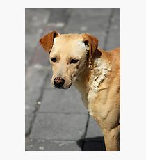 Brown Stray Puppy on the Street Photographic Print