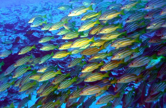Coral and a school of fish by Marjorie Wallace