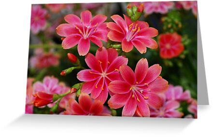 Crimson Spring Fireworks by Marjorie Wallace