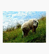 Mountain Goat Photographic Print