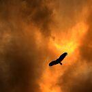 Blackbird by sincityyy