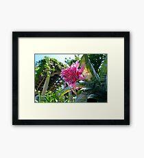 Urn plant flower Framed Print
