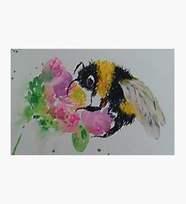 Bumble bee and pink flower Photographic Print