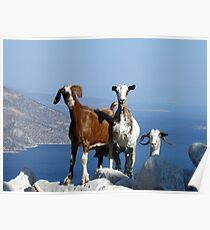 Happy Goats Poster