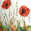 Orange Poppies in the grass by George Hunter