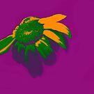 Daisy Bright on Purple by Heather Friedman