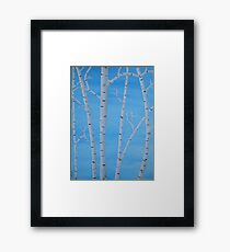 Birch Trees at Noon Framed Print