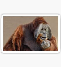 The Thinker - Sumatran Orangutan  Sticker