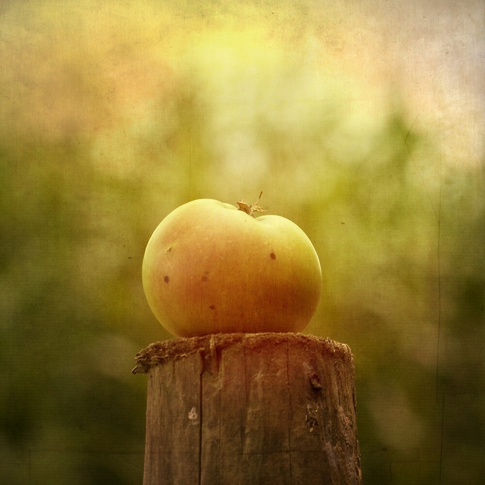 Portrait of an Apple by Ursula Rodgers