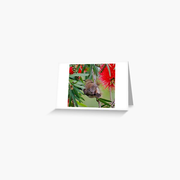 SC ~ HONEYEATER ~ Scarlet Honeyeater 4mLqypBS by David Irwin 230321 Greeting Card