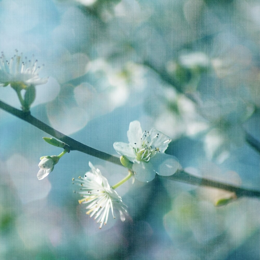 Blossoms in Blue by Ursula Rodgers