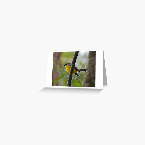 SC ~ ROBIN ~ Yellow Robin GHTdBPn3 by David Irwin 230321 Greeting Card