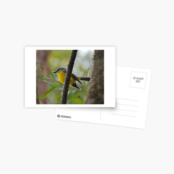 SC ~ ROBIN ~ Yellow Robin GHTdBPn3 by David Irwin 230321 Postcard