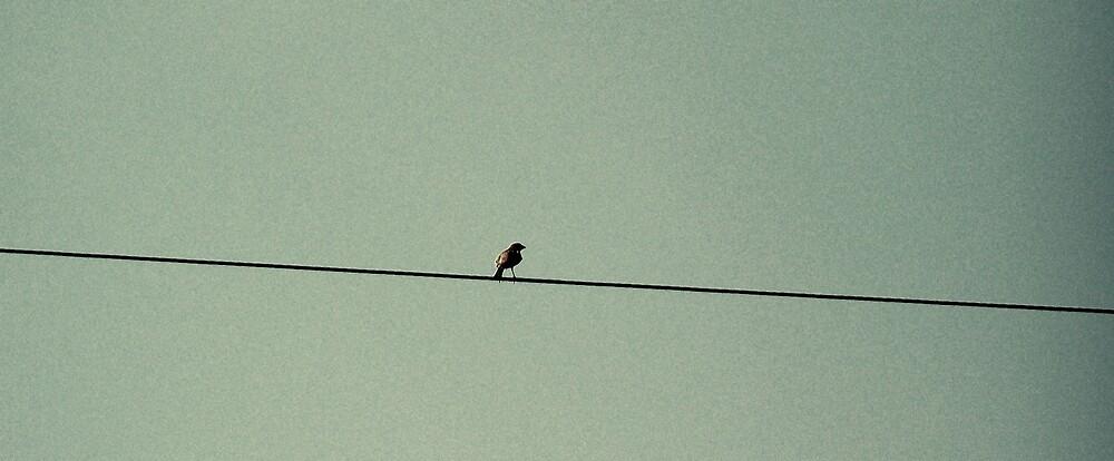 Bird by Kelsey Williams