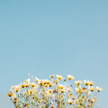 Minimal Yellow Daisies by hellotwiggs