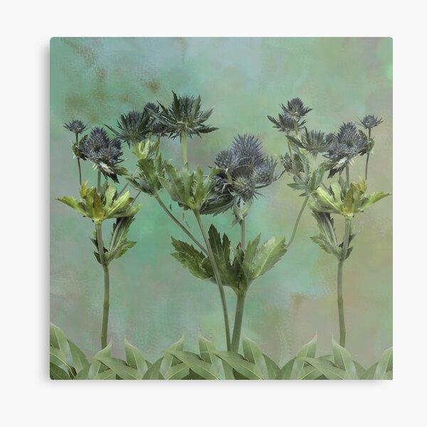 Blue Thistle Flowers Metal Print
