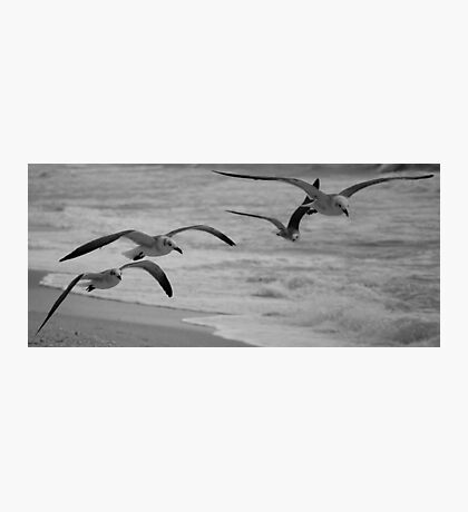 Flight  Photographic Print