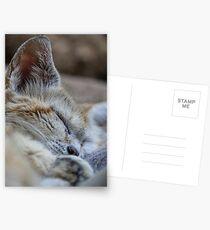 Sleeping sand dune cat Postcards