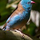 Blue Bird by martinilogic
