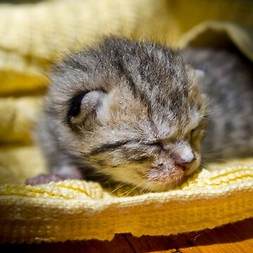 Newborn Kitten by meltedxpopsicle