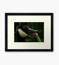 Happy Goose...........Dorset UK Framed Print