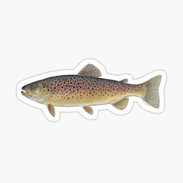 Brown Trout (Salmo trutta) Sticker