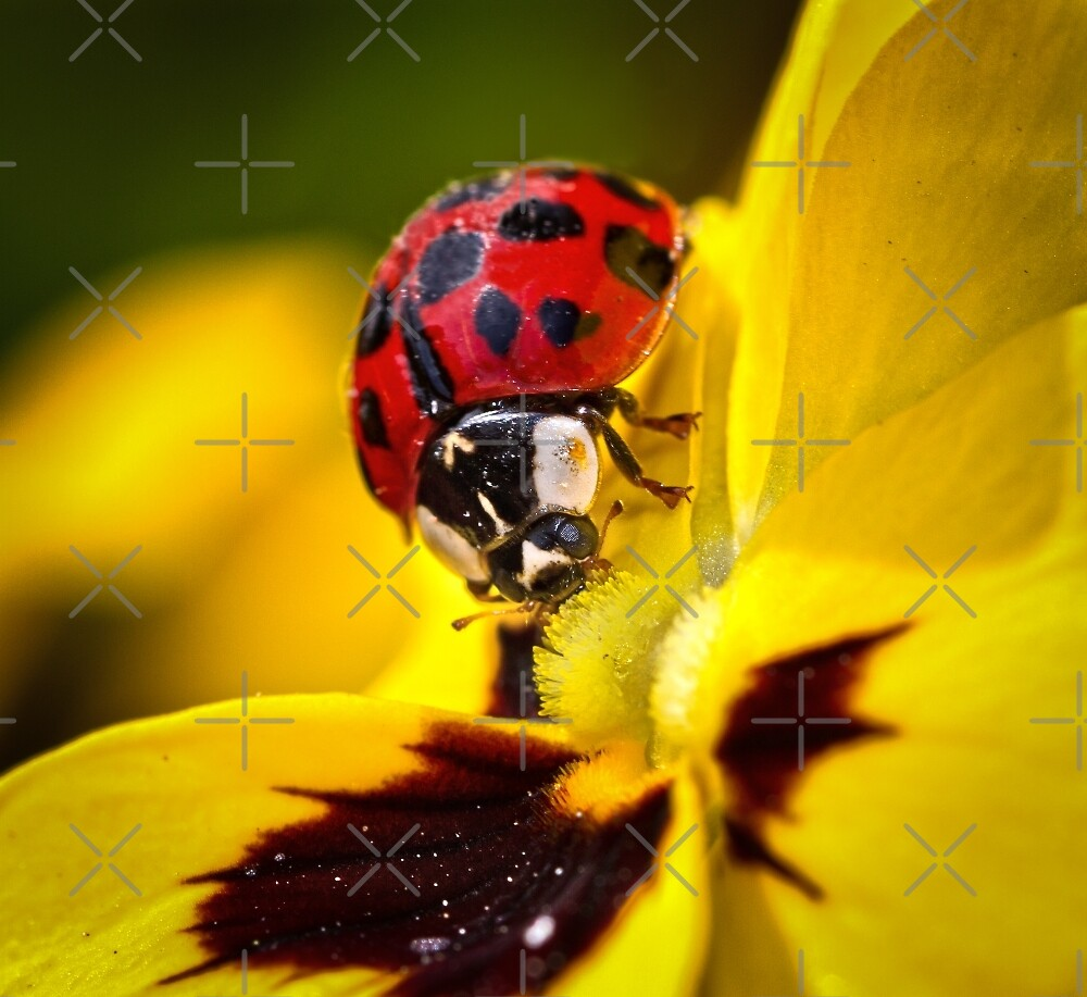 Red on Yellow..! by Geoff Carpenter