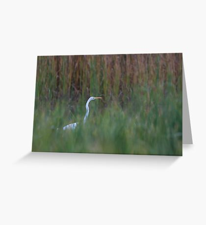 Great Egret amongst the reeds Greeting Card