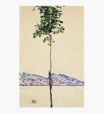 Egon Schiele - Little Tree. Schiele - forest view. Photographic Print