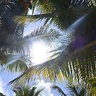 Sun & Palm Trees by Dagoth