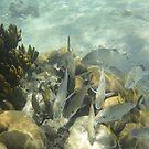 Fish Frenzy by Dagoth