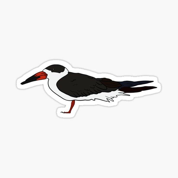 Black Skimmer (BLSK) Sticker