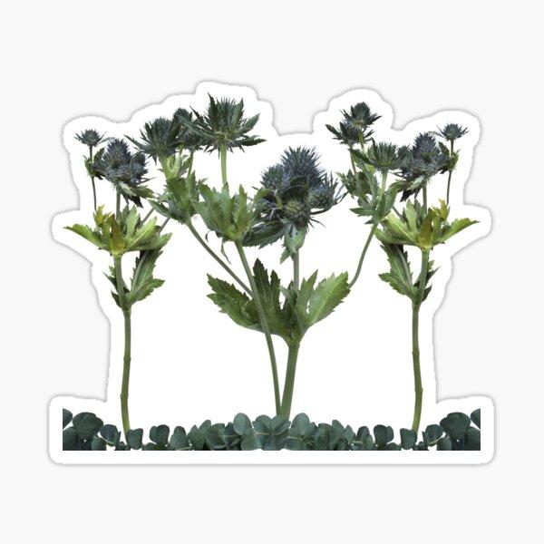Blue Thistle Flowers (2) Transparent Sticker
