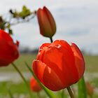 Tulip Photograph by Andrea Turner