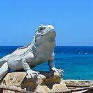 Lizard King Isla Mujeres by Dagoth