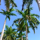 Palm Trees in Mexico by Dagoth
