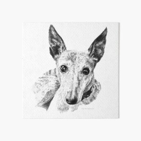 Tiger the Whippet Art Board Print