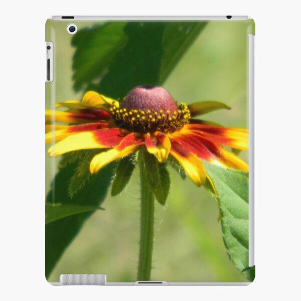 Plains Coreopsis iPad Snap Case