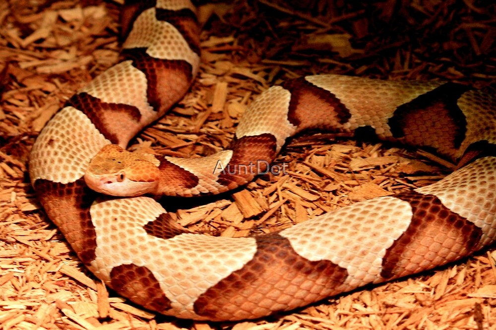 Copperhead for Monnie by AuntDot
